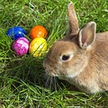 A bunny and decorated Easter eggs