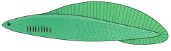 Haikouichthys, from about 518 million years ago in China, may be the earliest known fish.[29]