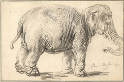 Rembrandt's 1637 drawing of an elephant