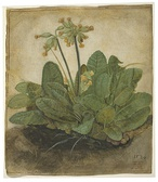 Albrecht Dürer, Tuft of Cowslips, 1526, National Gallery of Art