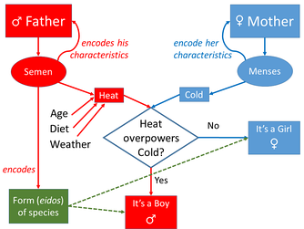 Aristotle's model of inheritance. The heat/cold part is largely symmetrical, though influenced on the father's side by other factors; but the form part is not.