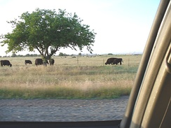 Much of the land on the base is rented out to ranchers for grazing their herds.