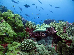 This coral reef in the Phoenix Islands Protected Area is a rich habitat for sea life.