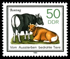 Stamp with bantengs from the GDR