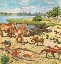 Animals of the Miocene (Chalicotherium, Hyenadon, entelodont)