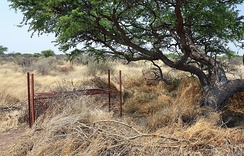 Cage trap (live trap) for cheetahs on a farm in Namibia