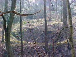 Depression or bell pit, evidence of early coal mining in Middleton Woods