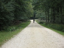 The New Forest offers many miles of bicycle paths