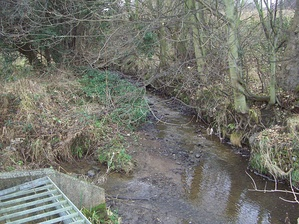 Shire Brook as it runs through the nature reserve. The stream from Birley Spa flows in on the left.