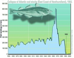The collapse of Atlantic cod off the coast of Newfoundland in 1992 as a result of overfishing.