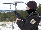 Wildlife officer tracking radio tagged mountain lion