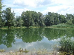 A naturalized former gravel pit lake in northern Croatia