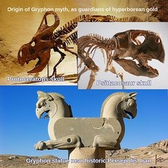 Ceratopsian skulls are common in the Dzungarian Gate mountain pass in Asia, an area once famous for gold mines, as well as its endlessly cold winds. This has been attributed to legends of both gryphons and the land of Hyperborea