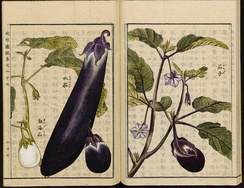 Varieties of Solanum melongena from the Japanese Seikei Zusetsu agricultural encyclopedia