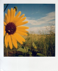 A sample shot of Polaroid Type 600, ISO 640, color film