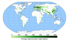Global production of potatoes in 2008