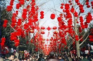 Red lanterns are hung from the trees during the Chinese New Year celebrations in Ditan Park (Temple of Earth) in Beijing.