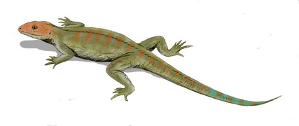 Hylonomus, the earliest sauropsid reptile, appeared in the Pennsylvanian.