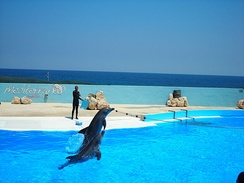 The dolphin show at Mediterraneo Marine Park. Tourism generates a significant part of the GDP of Malta.
