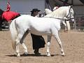 Светло-серая лошадь