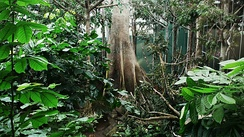 Artificial tropical rainforest in Barcelona