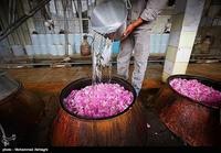 Golab being make in Qamsar - Kashan 18.jpg