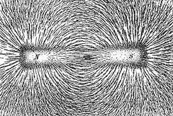 Iron filings that have oriented in the magnetic field produced by a bar magnet