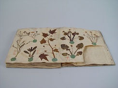 Herbarium book with Japanese plants, Siebold collection Leiden, 1825
