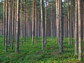 Forests cover over half the landmass of Estonia