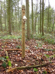 A thin wooden pillar located within woodland