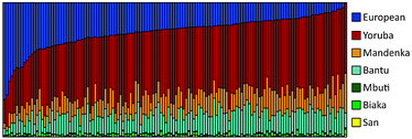 Genetic clustering of 128 African Americans, by Zakharaia et al. (2009).[141] Each vertical bar represents an individual.