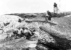 Excavation of the Ertebølle middens in 1880