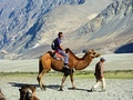Riding a Bactrian camel in Nubra Valley, India