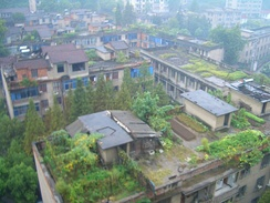 Roof gardens provide residents of an apartment complex in Tongyang Town, Tongshan County, Hubei with fresh produce