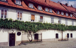 The more-than-400-year-old Žametovka grapevine growing outside the Old Vine House in Maribor. Right of it grows a daughter grapevine that has been cut from it.