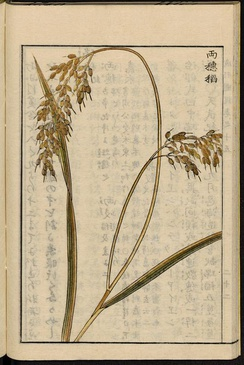 Double-headed rice, illustration from the Japanese agricultural encyclopedia Seikei Zusetsu (1804)