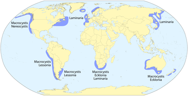 Global distribution of kelp that locally form forests.