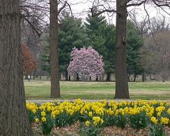 Tower Grove Park in spring