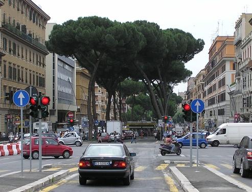 Пиния на улице Рима