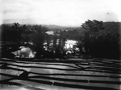 Rice fields terrace in Priangan highland, West Java, Dutch East Indies. In/before 1926.
