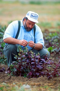 A geneticist evaluates sugar beet plants resistant to the fungal disease Rhizoctonia root rot for pollen fertility