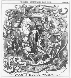 A satirical cartoon from 1882, parodying Charles Darwin's theory of evolution, on the publication of The Formation of Vegetable Mould through the Action of Worms (1881)