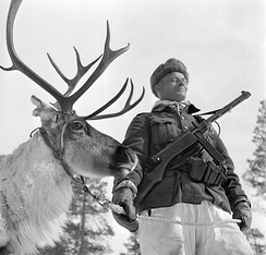 A Finnish soldier with a reindeer in Lapland. Reindeer were used to, for example, pull supply sleighs in snow conditions.