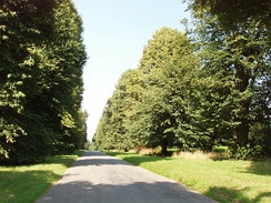 Avenue of lime trees at Turville Heath