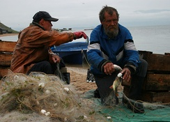Baikal fishermen fish for 15 commercially used species. The omul, found only in Baikal, accounts for most of the catch.[84]