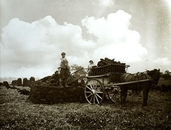 Harvesting the peat at Westhay, Somerset Levels