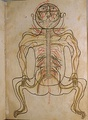 One of Mansur ibn Ilyas (Ak Koyunlu era) colored illustrations of human anatomy.