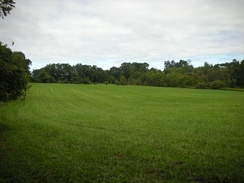 A field north of Fox Den Rd., along the Lenape Trail in Middle Run Valley Natural Area.