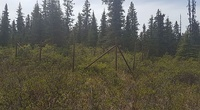 This fenced in area is part of a long-term research project to examine the effects of moose browsing on plant biodiversity.