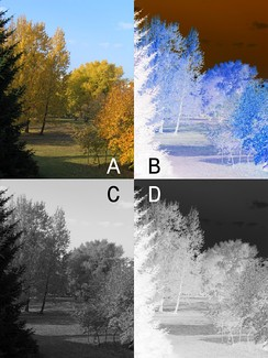 Color positive picture (A) and negative (B), monochrome positive picture (C) and negative (D)